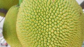 Jackfruit mit Naturhintergrund Lizenzfreie Stockbilder