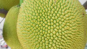 Jackfruit with nature background Royalty Free Stock Images