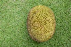 Jackfruit op de groene vloer Royalty-vrije Stock Fotografie