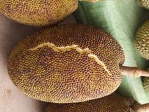 Jackfruit pálido - o amarelo estabelece, classifica descascado belamente Fotos de Stock
