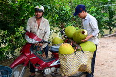 Jackfruit pickers. Mekong delta. Cai Be. Vietnam Royalty Free Stock Photography