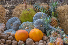 Jackfruit pineapple yam taro pumpkin fruit in garden.  Royalty Free Stock Photography