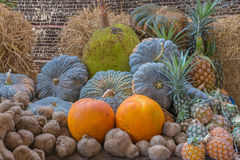 Jackfruit pineapple yam taro pumpkin fruit in garden.  Stock Image