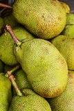 Jackfruit. Stock Photography
