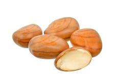 Jackfruit seed isolated on the white background Stock Image