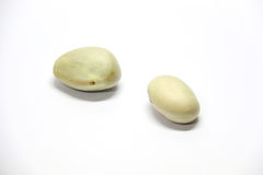 Jackfruit seeds Stock Image