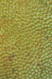 Jackfruit Texture Stock Photography