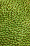 Jackfruit Texture Royalty Free Stock Images