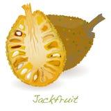 Jackfruit wektor ilustracja wektor