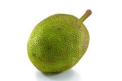 Jackfruit on white background. Big jackfruit on white background stock photos