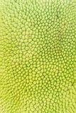 Jackfruitbakgrund eller textur Fotografering för Bildbyråer