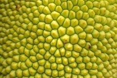 Jackfruiten arkivbild