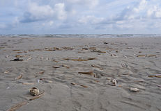 Jacknife lub żyletka milczkowie na plaży Obraz Stock