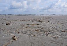Jacknife oder Rasiermessermuscheln auf Strand Stockbild