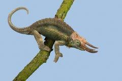 Jackson's Chameleon Trioceros jacksonii Stock Images