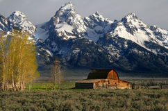 Jackson Hole Famous Barn Royalty Free Stock Images