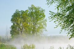 Jackson Hole Lake in Fog Stock Images