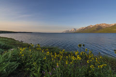Jackson Lake Wyoming Arkivbilder