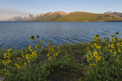 Jackson Lake Wyoming Royaltyfria Bilder