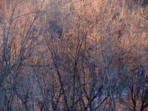 Jackson Pollock drzewa Obrazy Royalty Free