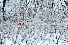 Jackson Pollockesque zimy drzewa obraz royalty free
