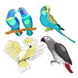 Jaco, Lovebird, wavy parrot kakadu set. Vector illustration Stock Photography