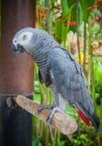 Jaco wild lebende Tiere im Bali-Vogel- und -reptilpark Lizenzfreie Stockfotografie