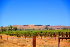 Jacob's Creek View. Photograph taken at Jacob's Creek Winery in the Barossa Valley, featuring a vineyard with dry hills in the background (South Australia Stock Photo