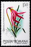 Jacobean Lily (Sprekelia formosissima), Flowers serie, circa 1980. MOSCOW, RUSSIA - JANUARY 4, 2019: A stamp printed in Romania shows Jacobean Lily (Sprekelia stock photography