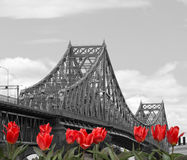 Jacques Cartier Bridge Royalty Free Stock Photography