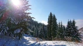 Jadł całkowicie zakrywający z śniegiem Śnieżna bajka w górach Chmury, słońce i niebieskie niebo fotografia royalty free