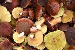 jadalne jesień pieczarki Obrazy Stock