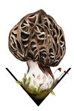 Jadalnego i dorosłego morchella esculenta pieczarka obraz stock