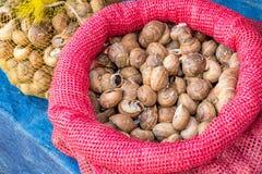 Jadalni ślimaczki w skorupach obrazy stock
