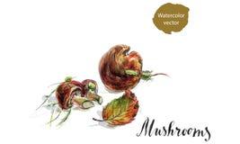 Jadalny pieczarka borowik z liśćmi i mech ilustracja wektor