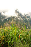 Jade-Drache-Schnee-Berg Lizenzfreies Stockbild