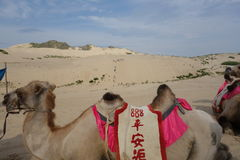 Jade Lonza Lake Park, chifeng city, Inner Mongolia, China in cross-country, camel riding and skateboarding sand Royalty Free Stock Images