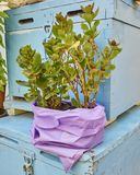 Jade plant in colorful flower pot and blue boxes stock image