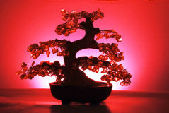 Jade tree Royalty Free Stock Image