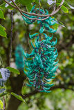 Jade Vine Flower Royalty Free Stock Photography