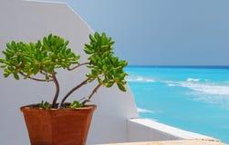 jade z widokiem na rośliny karaibów zdjęcie stock