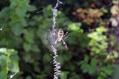 Jadowity pająk na pajęczynie zdjęcie stock