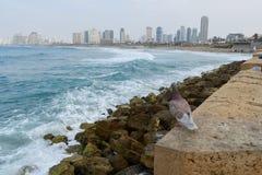 Jaff Israel arkivfoton