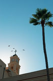 Jaffa, Old City, Israel, Middle East, St. Peter`s Church, bell tower, palm tree. View of the bell tower of St. Peter`s Church with the palm in the Old City on stock photography