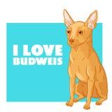 Jag älskar Budweis Arkivbild