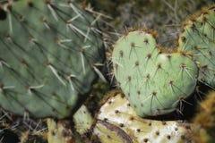 Jag älskar dig kaktuns royaltyfria foton