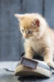 Jag älskar dig text och kattungen lyckliga valentiner för kortdag Royaltyfri Fotografi