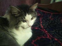 Jag älskar min katt royaltyfria foton