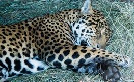 Jag спать Стоковая Фотография RF