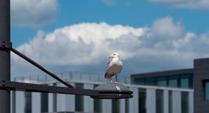 Jag håller ögonen på dig - seagullen på havet arkivfoto